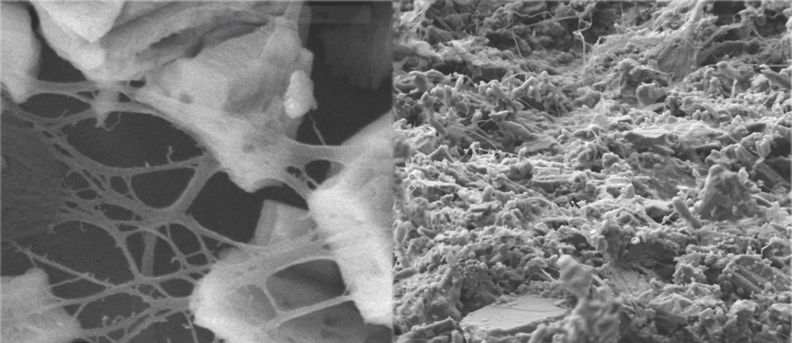 SEM pictures of a composite with 20% MFC from NBSK and 80% GCC