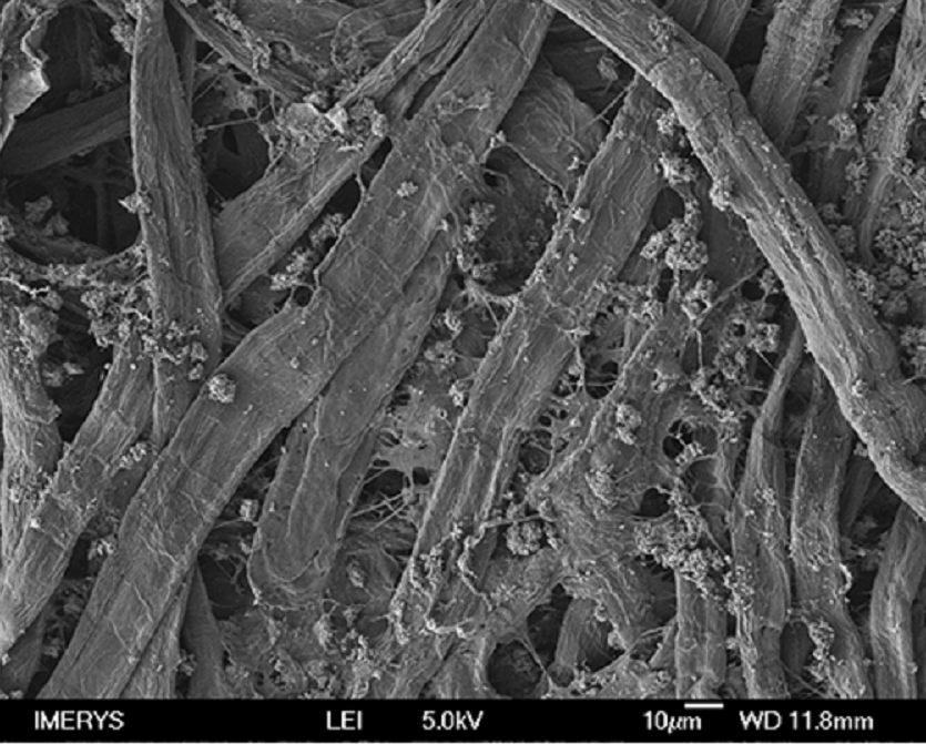 Surface micrograph of finepaper containing FiberLean MFC and filler